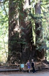 Redwood Forest California Pacific Coast Highway