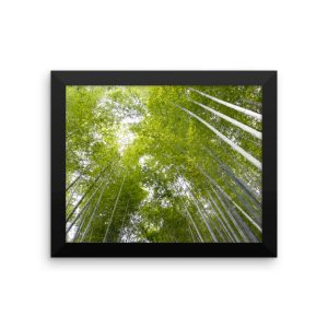 Bamboo Forest in Kyoto, Japan, in a Framed Poster