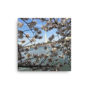 Annual Cherry Blossoms in Washington, DC, on Canvas