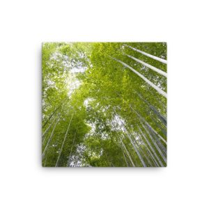 Bamboo Forest in Kyoto, Japan, on Canvas