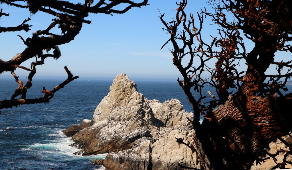 Point Lobos California Pacific Coast Highway