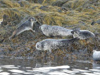 Seafari Seals County Kerry Ireland